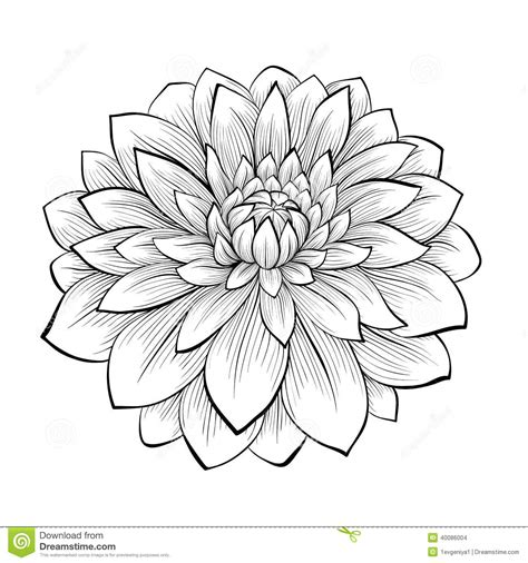 Flower Outline Black And White by Dahlia Flower Outline Clipart