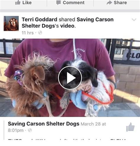 carson shelter dogs memes of 2017 on sizzle its here
