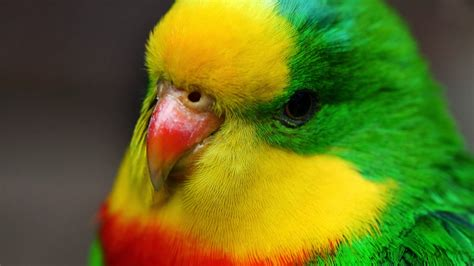 colorful birds wallpaper hd colorful love birds wallpaper hd hd wallpaper
