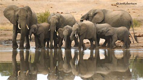the ultimate romance of africa safari andbeyond jen robertson on safari andbeyond guest bateleur blog