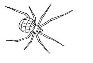 Spinne Ausmalbild  Ausmalbilder Kostenlos Bilder Zum Ausmalen sketch template