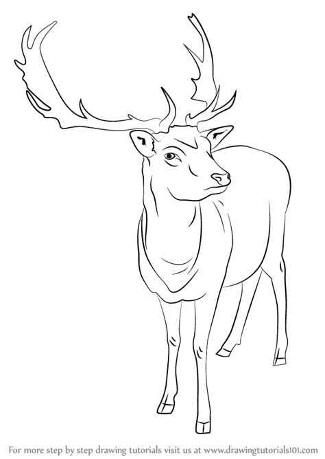 doodle draw reindeer learn how to draw a reindeer animals step by step