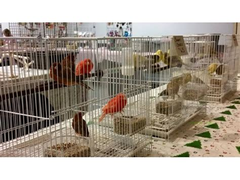 Bird Fair In Cottage Grove This Sunday Woodbury Mn Patch Vfw Cottage Grove Mn
