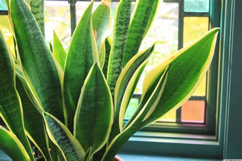 Indoor Flowering Plants That Don T Need Sunlight by 6 Houseplants That Are Low Maintenance And Easy To Care