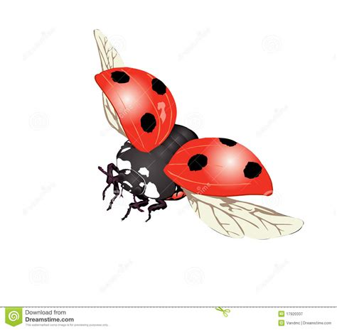 ladybug in fly illustration royalty free stock photography