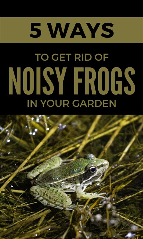 how to get rid of frogs in backyard 5 ways to get rid of noisy frogs in your garden