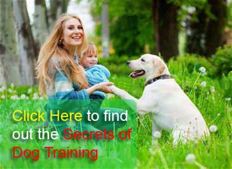 best puppy tips best tips