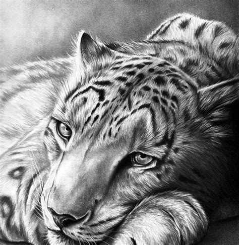 Best Pencil Drawings Top Pencil Drawings