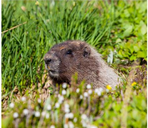 groundhog day concept 4 surprising facts about groundhog day tgif this