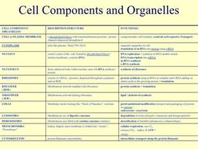 Cell components and organelles cell component organelles description