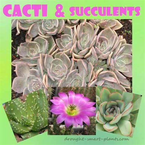 succulents plants adaptations for cacti and succulents modified for drought resistence