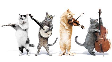 animali che fanno rumori divertenti  strani
