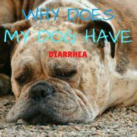 why do puppies get diarrhea caring for a senior