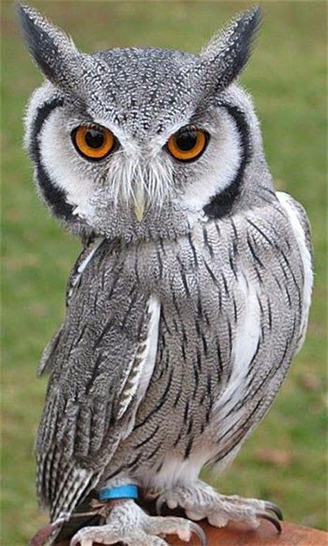224 best images about burung cantik on pinterest love 8 best images about burung hantu on pinterest