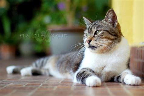gambar painting kucing home animal gambar gambar lucu car interior design