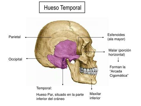 imagenes de huesos temporales hueso temporal