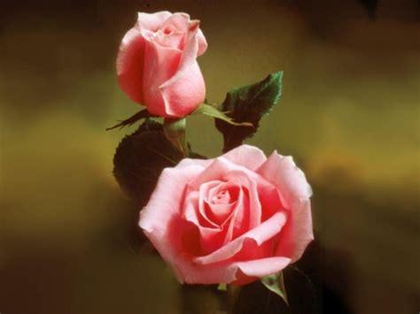 imagenes de flores juntas incurs 245 es abril 2007