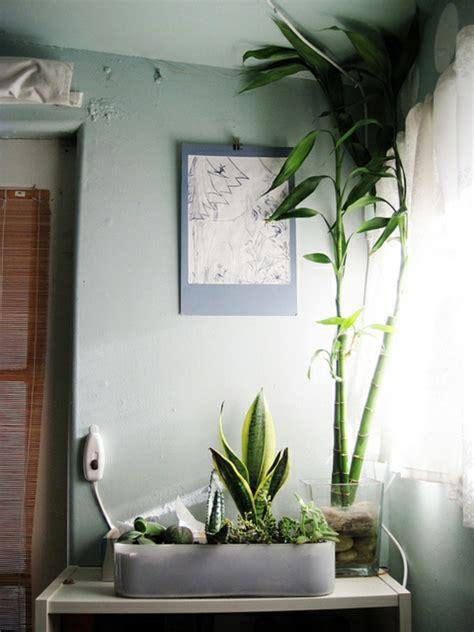 pflanzen im schlafzimmer es lohnt sich fuer sicher