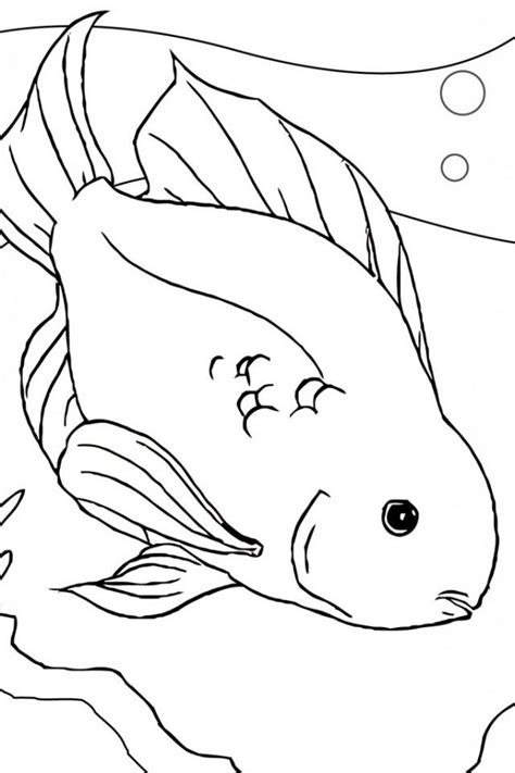 coloring pages betta fish betta fish coloring page coloring home