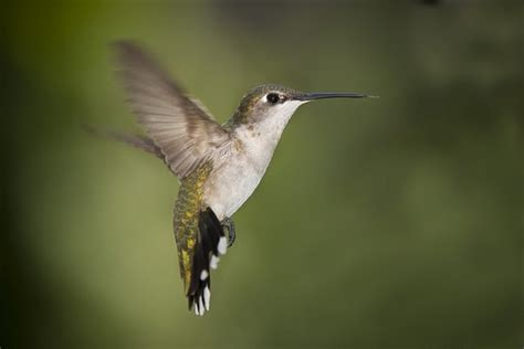 attract hummingbirds with a mixture of four parts water