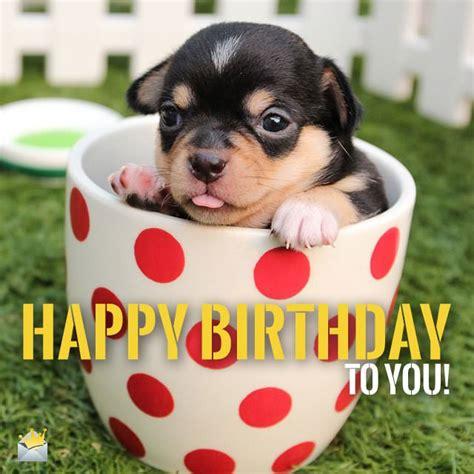 puppy happy birthday image gallery happy birthday