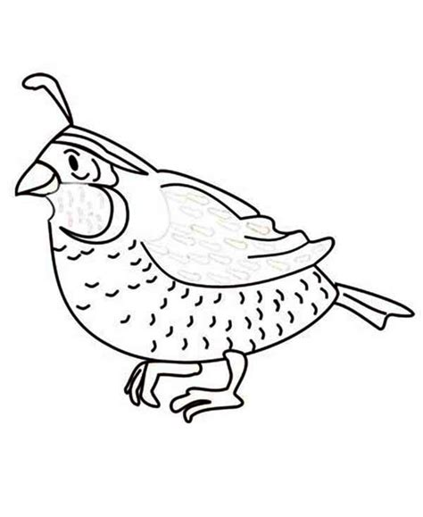 free coloring pages of california valley quail