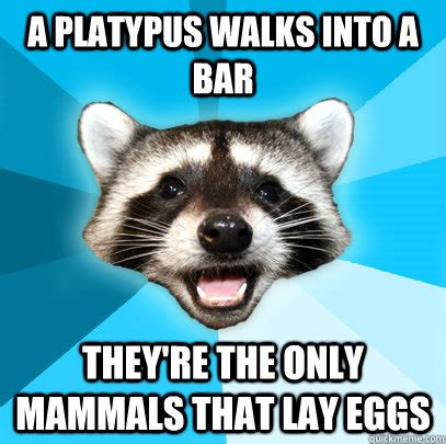 Lame Pun Coon Meme - a platypus walks into a bar they re the only mammals that