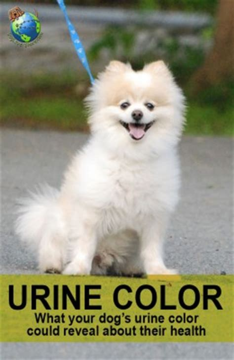 why does my dog continue to pee in the house dog urine color why is my dog s urine yellow or brown yellow red orange dogloverstore