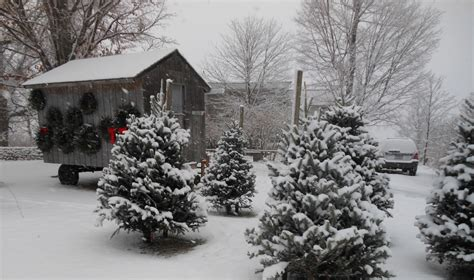 best christmas tree farms for families near new york city