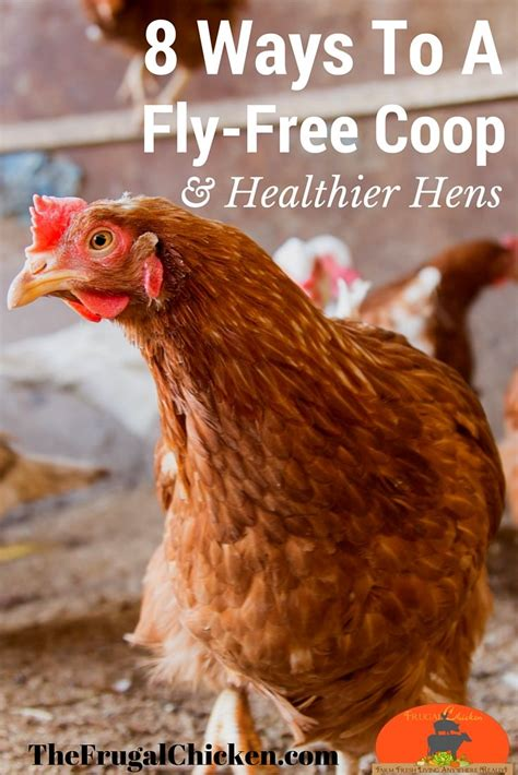 backyard chickens and flies 1000 images about chickens on pinterest backyard