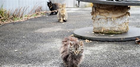 stray cat trap a closer look at community cats aspca