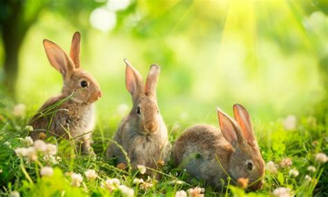 How To Keep Rabbits Out Of Your Backyard by How To Keep Rabbits Out Of Your Garden Smart Tips