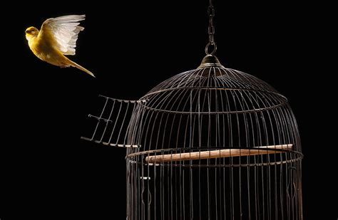 New Home Interior Ideas by Tips For Maintaining A Clean Bird Cage