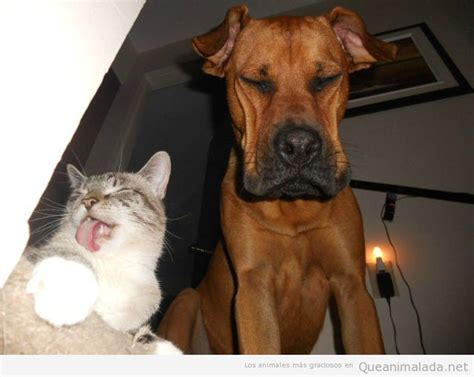 fotos animales riendose otra vez est 225 tu gato burl 225 ndose de tu perro