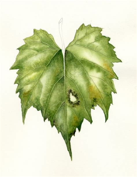watercolor painting techniques for leaves how to lift veins in watercolor for the botanical
