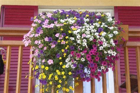 fiori sui balconi fiori ai balconi foto di family wellness hotel renato