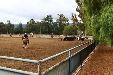 doodlebug ranches llc paicines ranch term and term boarding