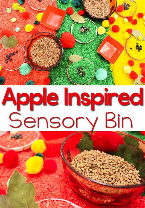 Apple Scented Opportunities by Apple Sensory Bin The O Jays Sensory Bins And Apples
