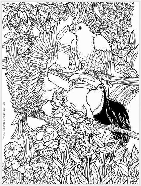 parrots bird adult free coloring pages realistic