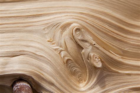 Images Branch Structure Grain Texture Floor