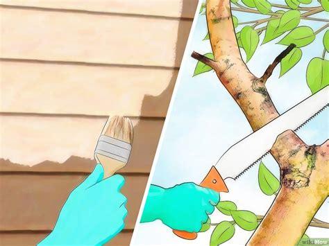 scorpioni in casa come eliminarli come eliminare i calabroni
