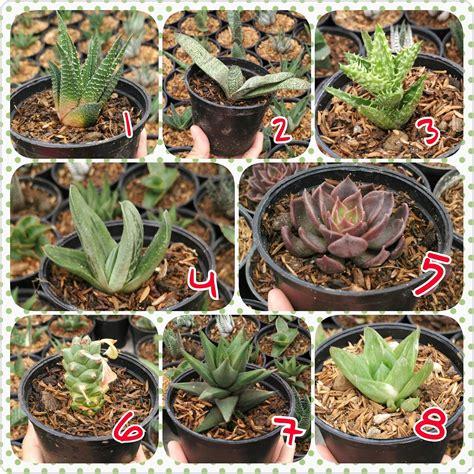 Murah Penghapus Oreo Mini Isi 2 Buah jual sukulen dan kaktus mini harga murah bandung oleh toko dieia olshop