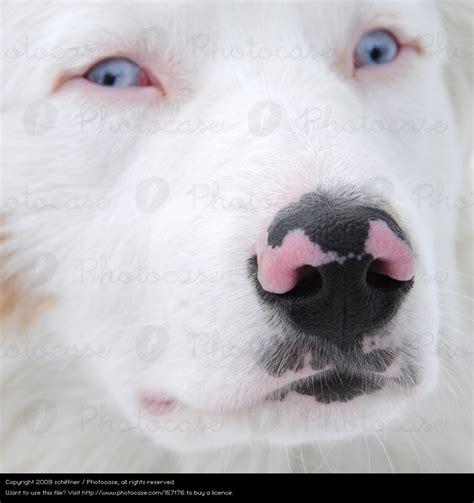 pink nose puppy photocase black pink fear nose pelt schiffner photocase creative stock photos