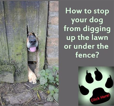 what to give a yorkie for upset stomach how to stop a from digging a wooden fence what bones are safe for dogs to