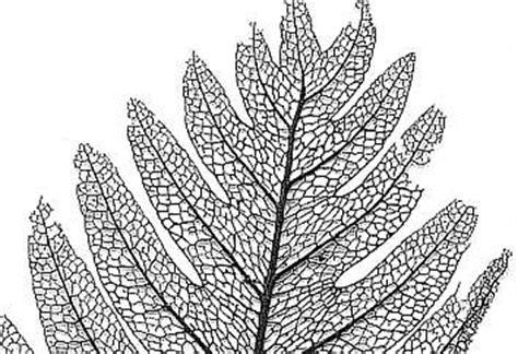 pattern formation leaf botany online growth differentiation pattern formation