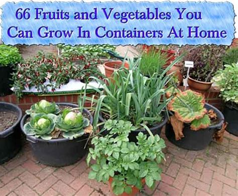 vegetables you can grow in pots 66 fruits and vegetables you can grow in containers at home