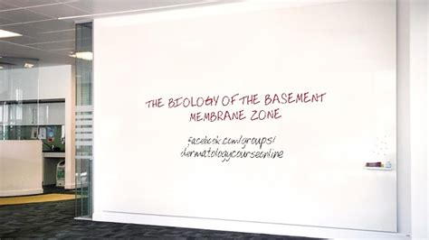 the biology of the basement membrane zone
