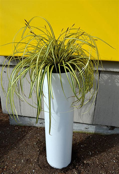 pvc pipe planter refresh your space with a diy plant stand or planter