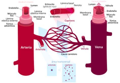 Blood Typr 3 vaso sangu 237 neo la enciclopedia libre