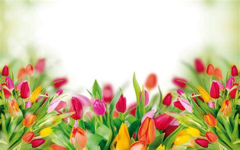 flores arreglos florales a domicilio envie flores en floreria en monterrey env 237 os florales compra en linea